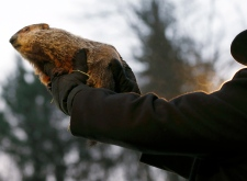Punxsutawney Phil indicted