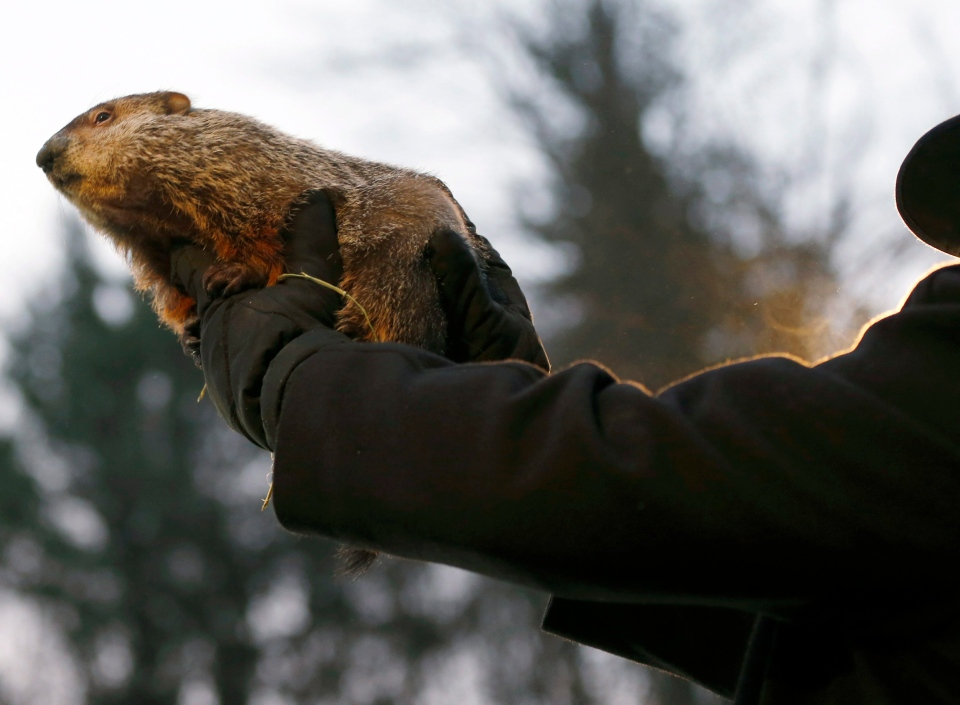 A Groundhog Club Co-handler holds the weather predicting groundhog, Punxsutawney Phil, after he was taken from his stump in Punxsutawney, Pa. on Feb. 2, 2013. (AP / Keith Srakocic)