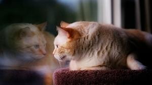 cat austen