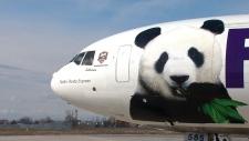 Pandas arrive in Toronto