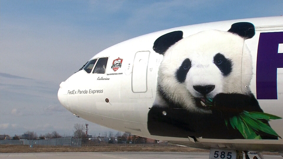A FedEx plane carrying two giant pandas arrives in Toronto, Monday, March 25, 2013.