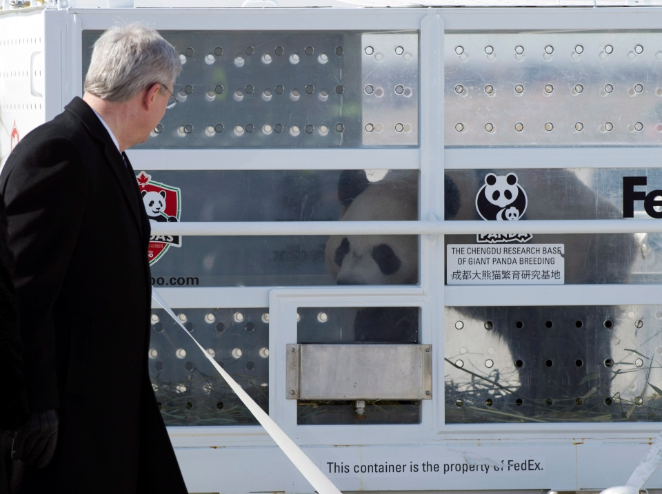 Prime Minister Stephen Harper stands on the tarmac at Pearson Airport in Toronto on Monday March 25, 2015 as he welcomes Da Mao, one of two Giant Pandas on loan to Canada from China. (Frank Gunn / THE CANADIAN PRESS)