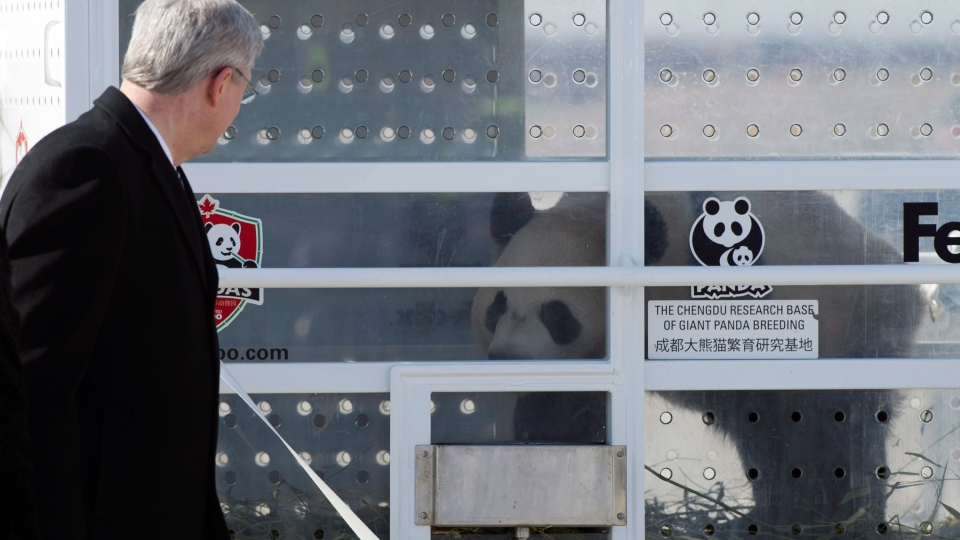 Prime Minister Stephen Harper stands on the tarmac at Pearson Airport as he welcomes Da Mao, one of two Giant Pandas on loan to Canada from China, in Toronto on Monday, March 25, 2015. (Frank Gunn / THE CANADIAN PRESS)