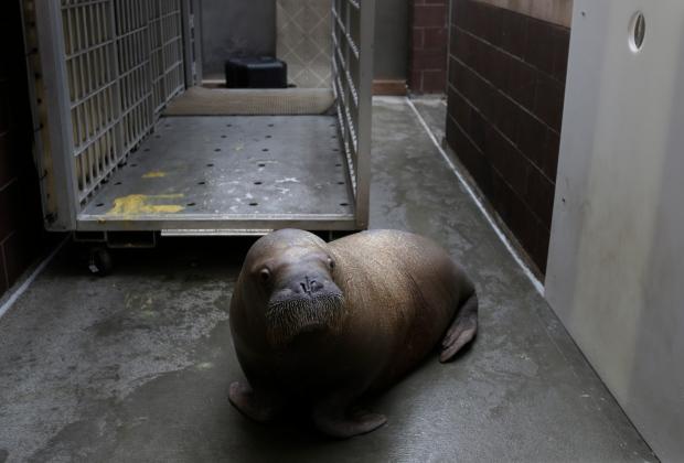 NYC aquarium rebounds after Superstorm Sandy