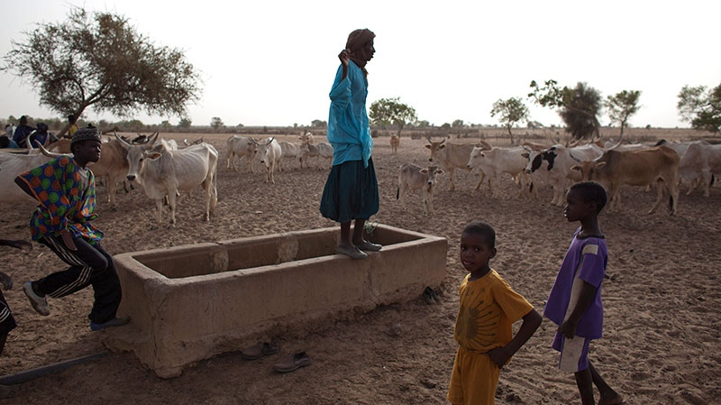 A herder stands on an empty water trough as he surveys his animals, in the village of Mbelone in the Matam region of northeastern Senegal, Tuesday, May 1, 2012. (AP / Rebecca Blackwell)