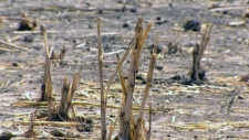 Canada pulls out of UN drought convention