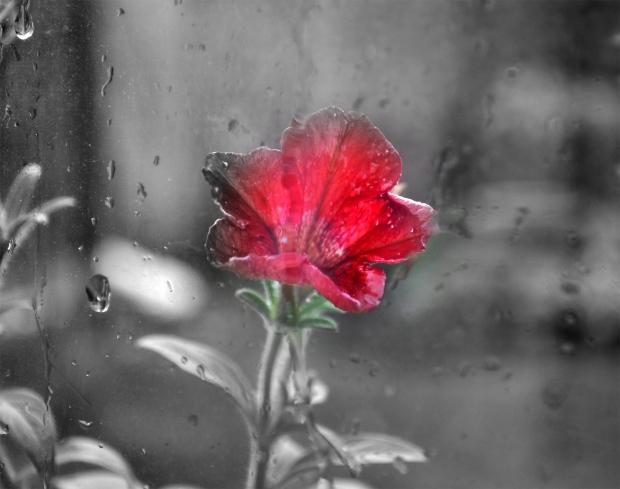 anwar_flower
