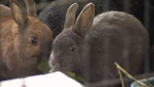 Rabbit-rampant Automall hosts Easter adoption day