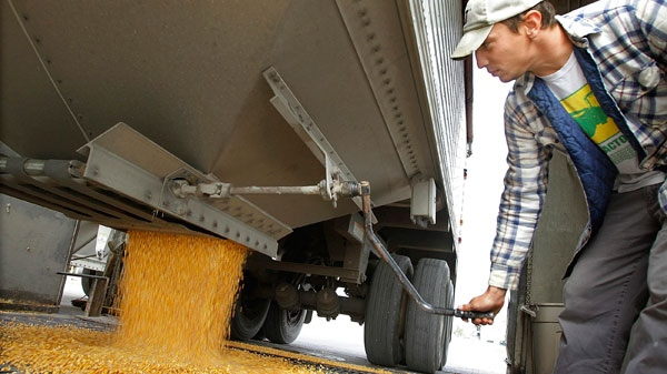 In this Oct. 13, 2010 photo, central Illinois farmer Adam Wallace unloads harvested corn from his truck at Archer Daniels Midland Curran Grain Elevator near Curran, Ill. (AP Photo / Seth Perlman)
