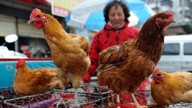 Shanghai reports bird flu deaths