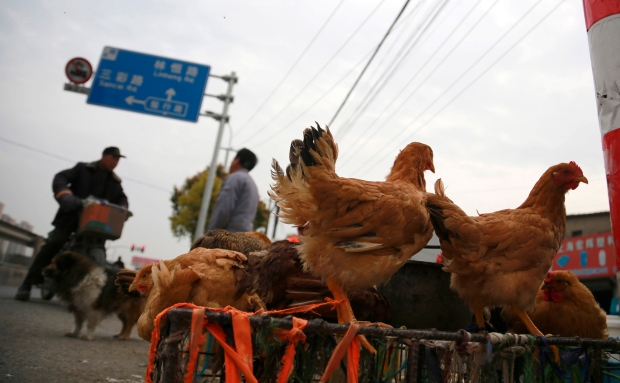 Bird flu virus that killed 2 unlikely to spread
