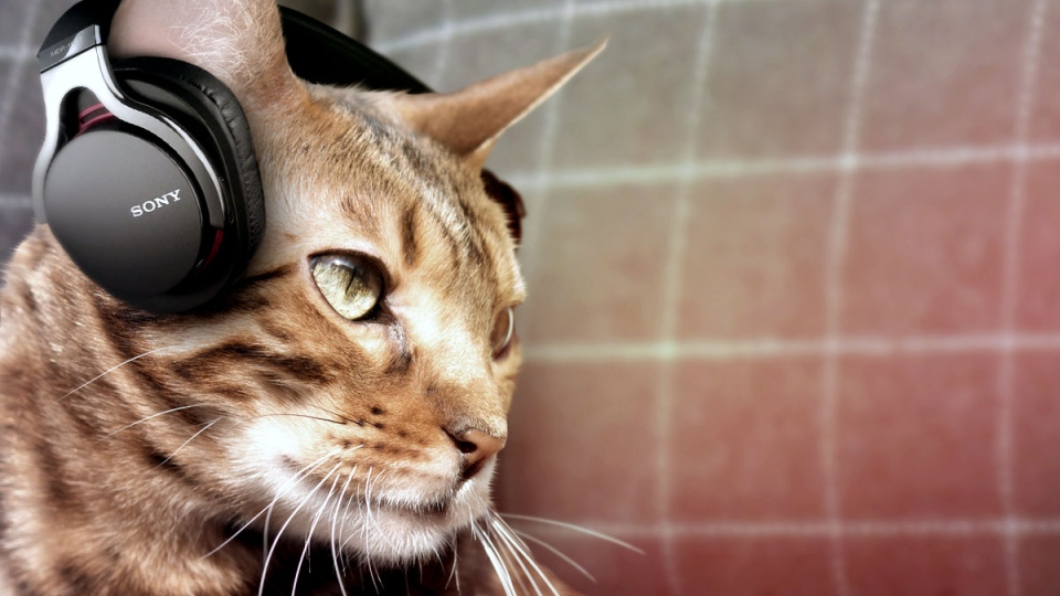 April Fools marketing from Sony indicates they are producing headphones for cats.