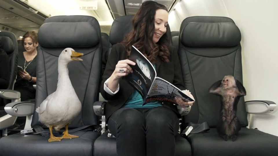 WestJet posted an ad on YouTube saying the airline will now allow all passengers' 'furry friends' to travel in comfort.
