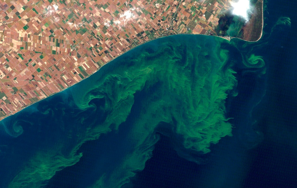 This Oct. 5, 2011 satellite photo from a NASA website shows algae blooms swirling on Lake Erie. (AP Photo/NASA)