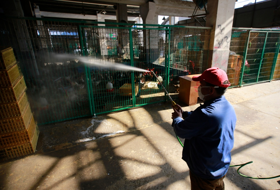A worker spays disinfectant liquid to chicken cages at a chicken whole sale market on Tuesday April 2, 2013 in Shanghai, China.  (AP Photo)