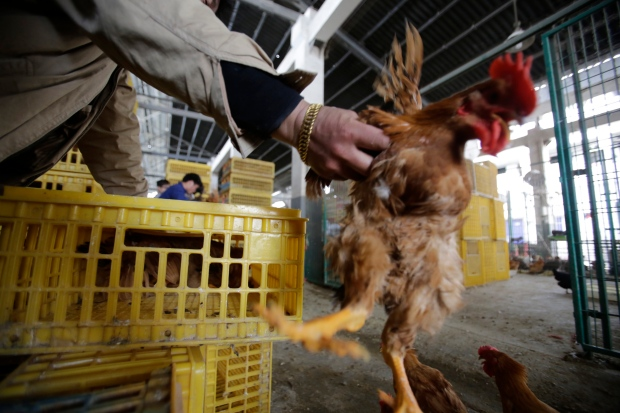 Bird flu likely silent threat in China