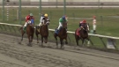 Four jockeys compete at a Hastings Racecourse event on Saturday, April 13, 2013. (CTV News Vancouver)