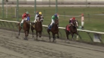 Four jockeys compete at a Hastings Racecourse event on Sat., April 13, 2013. (CTV)