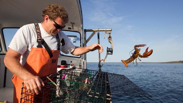 Warming oceans spark lobster harvest concerns