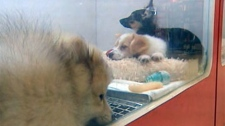 Dogs are seen in a store window.