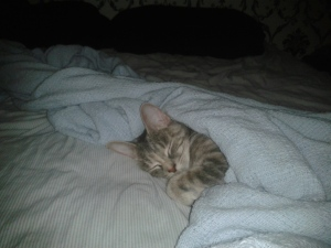 <b>Cat Week: Meet the feline friends of Canada AM viewers</b> <br><br>This is 3-year-old Benny who has developed a love for sleeping under the blankets! So much so, she&#39;s able to tuck herself in.<br><br>From Sherry Kiefert