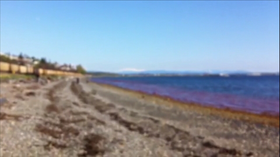 Environment Canada is investigating after a red sludge poured from a pipe onto a White Rock beach on Apr. 22, 2013. (CTV)