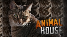 W5 investigates when having too many pets goes from caring to cruelty.