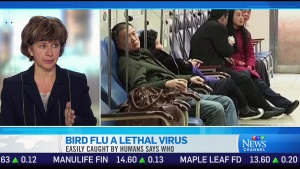 CTV News Channel: H7N9 strain more easily spread