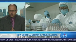 CTV News Channel: How lethal is bird flu?