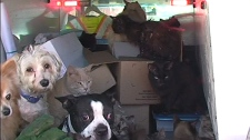 Animals taken from a home in Fenelon Falls, Ont. is shown in this video image.