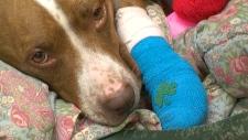 Nalla, injured dog
