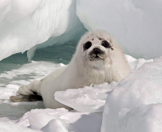Scotland challenges EU seal product ban