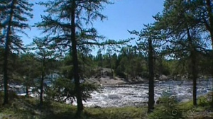 A new study suggests drier weather will likely eliminate any advantage for Canada's boreal forest from higher temperatures caused by climate change.