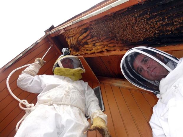 Utah cabin held 60,000 bees
