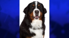 Four dogs inducted into Animal Hall of Fame