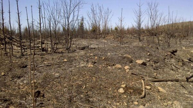 Firefighters on alert after forest fire near Kedgwick, N.B ...