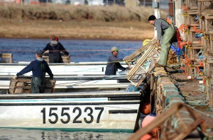Lobster fishermen load traps onto their boats at Jude's Point Wharf in Tignish, P.E.I. Saturday, April 30, 2011. (Nathan Rochford / THE CANADIAN PRESS)