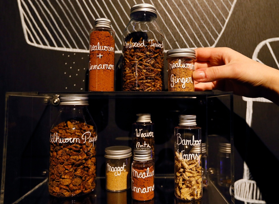 Dried insects and insect spices are displayed at the Wellcome Collection in London, Tuesday, April 23, 2013. (AP Photo/Kirsty Wigglesworth)