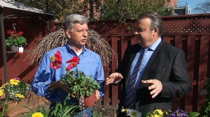 Canada AM: What to do with perennials