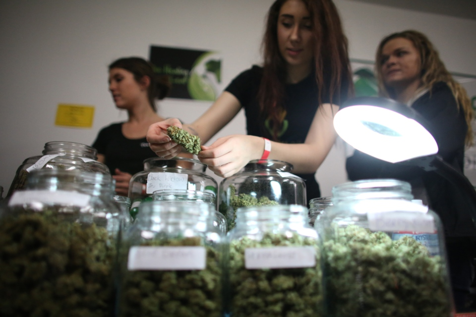 Employees of the U.S.-based Healing Leaf collective show some of their product during a legal marijuana celebration in Seattle in this April 2013 file photo. (seattlepi.com / Joshua Trujillo)