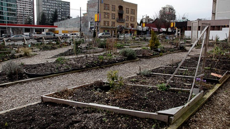 Newly planted community garden plots are seen at the corner of Burrard and Davie streets in downtown Vancouver on March 21, 2011. (Meaghan Baxter for ctvbc.ca)
