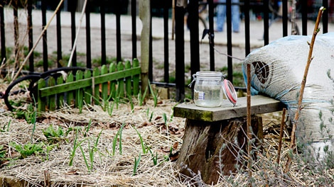 Signs of spring abound at Vancouver community garden plots. (Meaghan Baxter for ctvbc.ca)