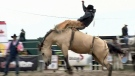 CTV BC: B.C. rodeo steering clear of controversy