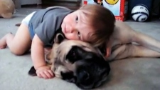Canada AM: Bringing a baby home to pets