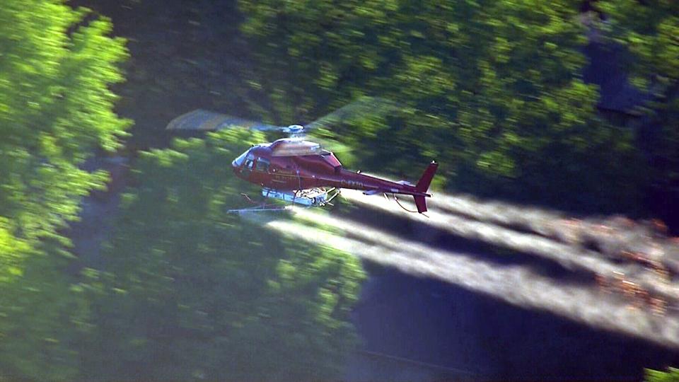 Extended: Aerial Gypsy Moth spray