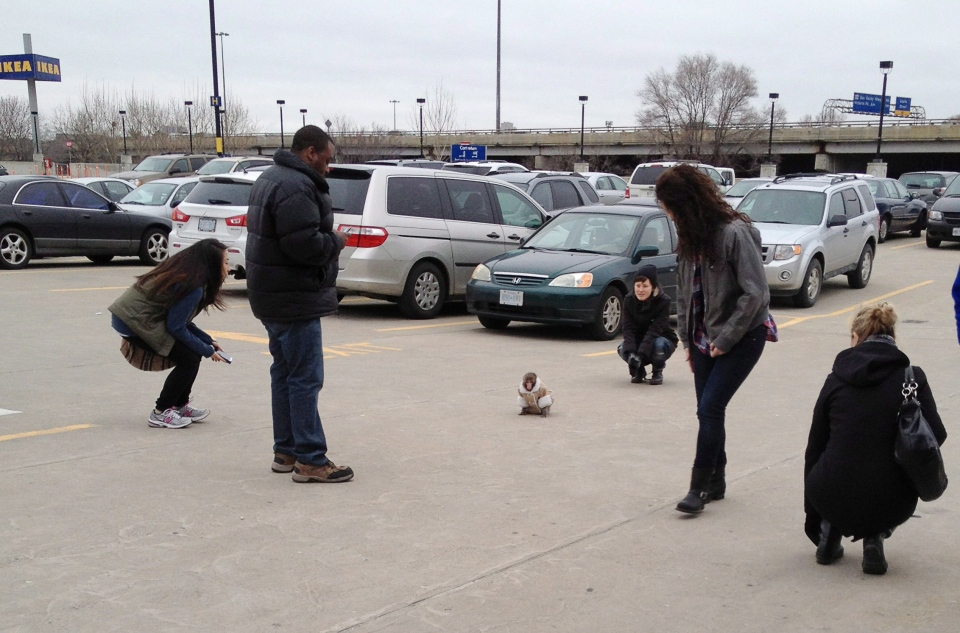 A small monkey wearing a winter coat and a diaper apparently looks for it's owners in an IKEA parking lot as customers take photos in Toronto on Sunday Dec. 9, 2012. (HO / THE CANADIAN PRESS)