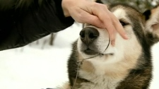 A pet owner demonstrates how this snare trap closed her dog's jaw shut