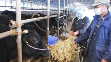 Dairy farmers feed cows at a cowshed in Iitate, Fukushima Prefecture, Japan, Thursday, March 31, 2011. (AP / Sei Shimizu)