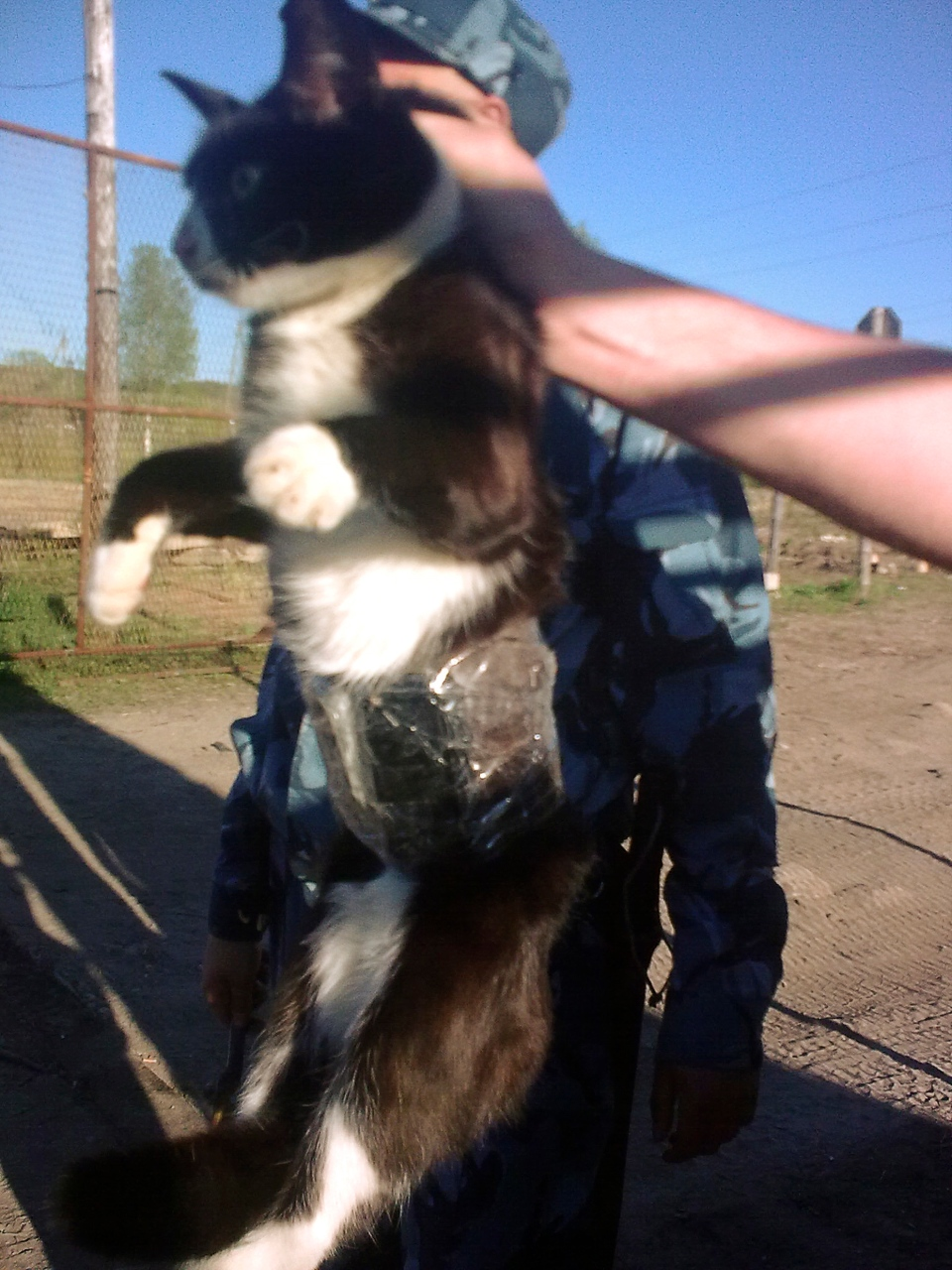 Guards patrolling a prison colony in Russia's north saw a cat on the fence and it seemed to be carrying something. On a closer look, they found a few cellphones and chargers taped to the cat's belly. (AP Photo/Press service of the Russian Federal Penitentiary Service for the Republic of Komi)