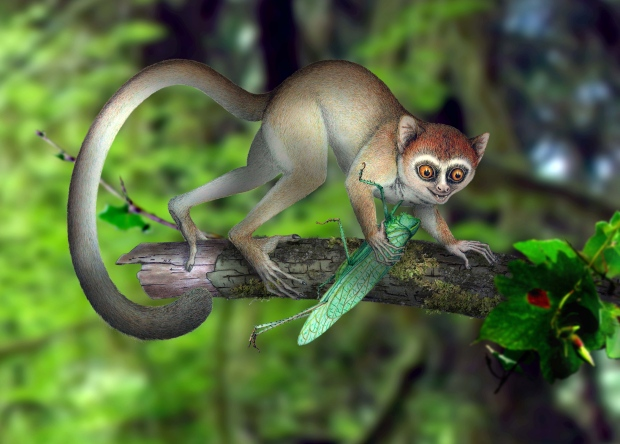 Early primate fossil